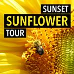 Sunset Sunflower Tour at Donaldson Farms with Rick Gerrity
