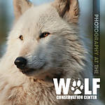 Photography at the Wolf Conservation Center